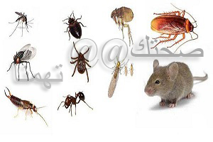 القضاء على الحشرات المنزليه نهائيا