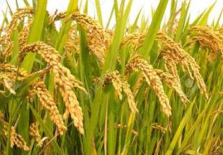 potensi ekonomi pertanian kediri