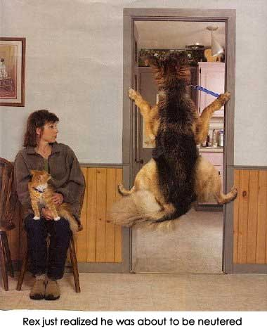 The teach Zone: Funny dog videos, puppies, dog training Picture