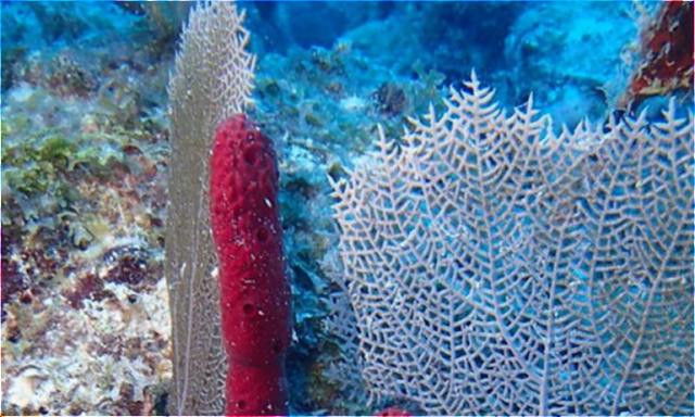 Penelitian Kultur Sel Invertebrata Laut (spons) - Tandingan.Com