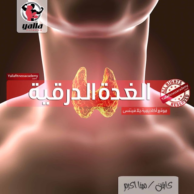 الغدة الدرقية Thyroid Gland