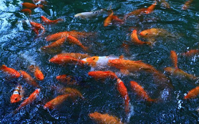 รูปปลาคราฟ
