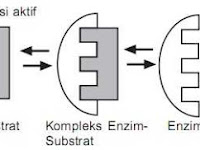 Cara kerja enzim Metabolisme Kelas 12 IPA SMA-MA