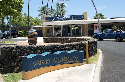 Un aquarium public au beau milieu d'un aquarium naturel géant… Le Waikiki Aquarium présente quasi-uniquement des espèces du Pacifique, dont une belle sélection d'espèces endémiques d'Hawaï. Photo : Sabine Penisson