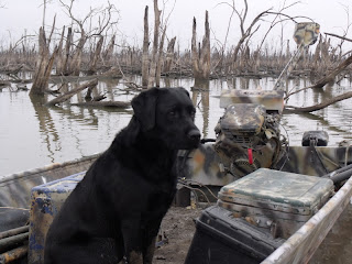 North Texas Duck Hunting/North Texas Dog Trainers/North Texas Retriever Trainers