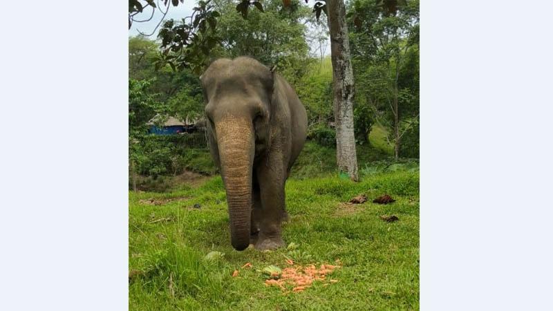 Gajah medan zoo lepas