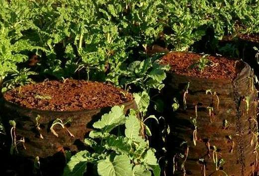 Multi Storey Vegetable Garden Technology In Kenya Is A Low Input Low Labor  Farming Activity. This Involves Establishing A Garden Container Such As A  Large ...