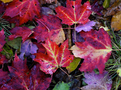 One Man's Wonder: AUTUMN LEAVES – As If For the First Time