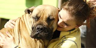 carinho com cães