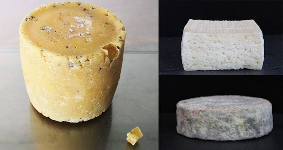 human cheese