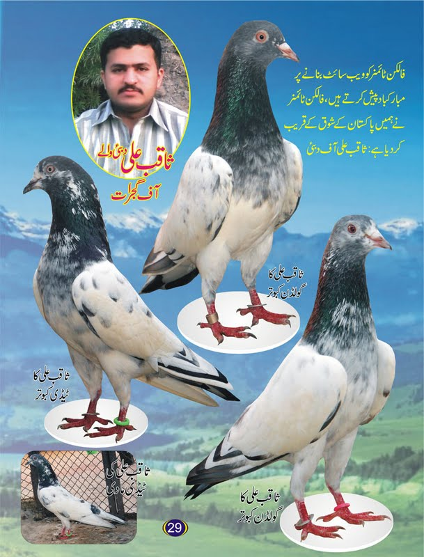 New Pigeons Magazine | Latest Pakistani Champion Kabootar ~ Kabootar
