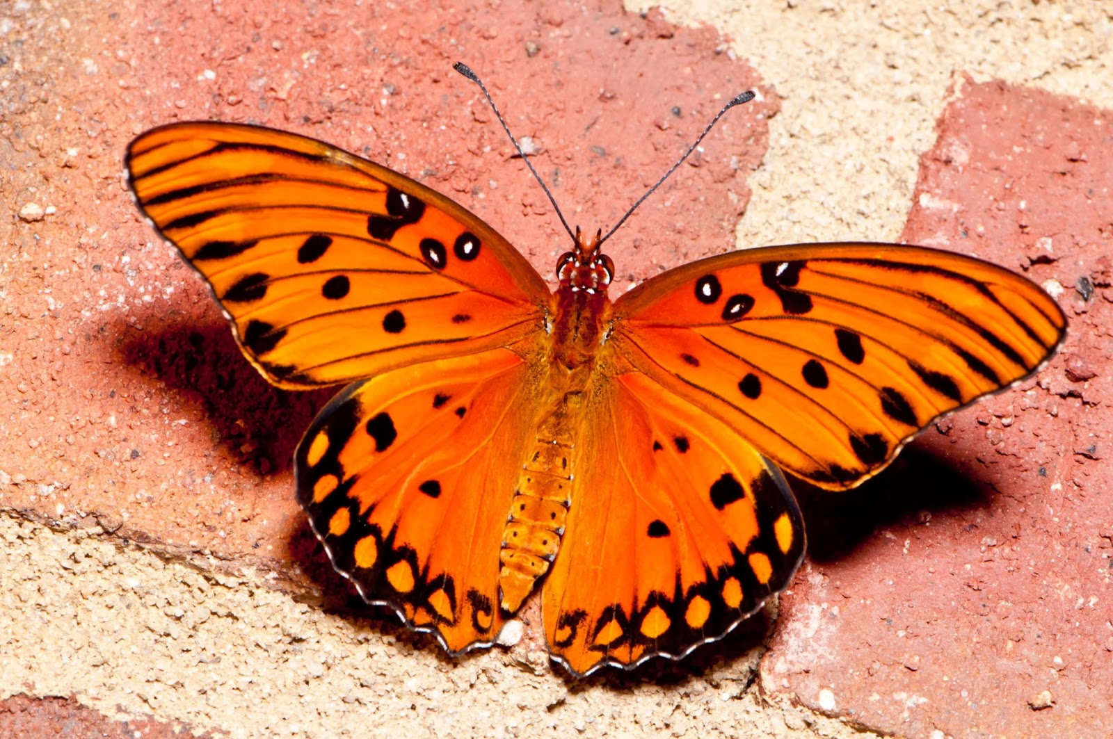 Aninimal Book: All Wallpapers: Butterfly hd wallpapers 2013