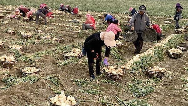 農民職業災害保險給付範圍 9/10起職業病納入職災給付
