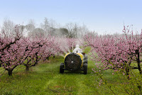 bees, agribusiness, profits, pesticides