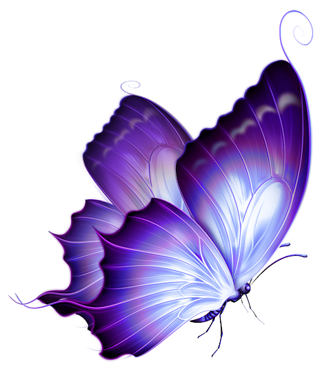 Butterfly Neon Png