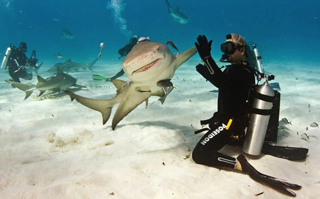 Funny Shark High Five Photo Image