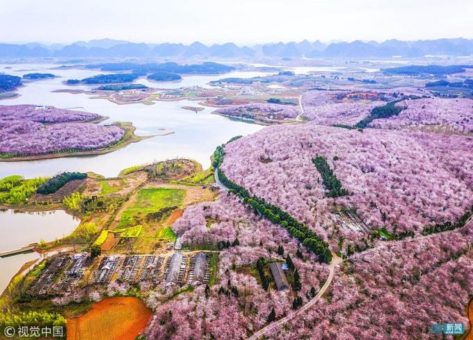Hòn đảo hoa anh đào 'đẹp rụng rời' ở Trung Quốc - Ảnh 4