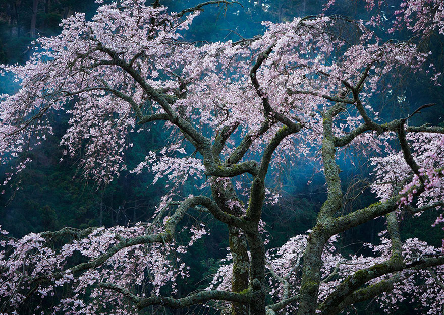 These Are The 35 Best Pictures Of 2016 National Geographic Traveler Photo Contest - Fascination, Japan