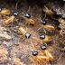 Best Termite Killer