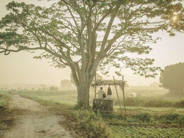 """Về làng Hà Cảng (Huế) xem cây """"Mắt Biếc"""""""