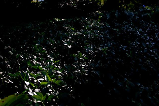 Fruticosum photos on Flickr | Flickr