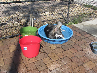 Shared surfaces at places like dog parks can be an easy place to catch dog flu.