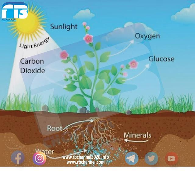 التركيب الكيميائي للنبات   كيمياء زراعية