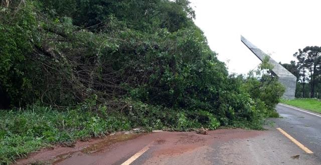 Roncador: Vento derruba árvore e pista fica parcialmente interditada na saída para Nova Cantu