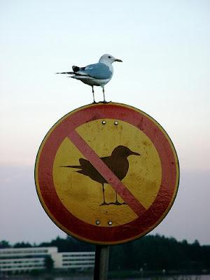 Las reglas se hicieron para romperse