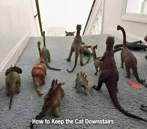 Funny How To Keep The Cat Downstairs Picture