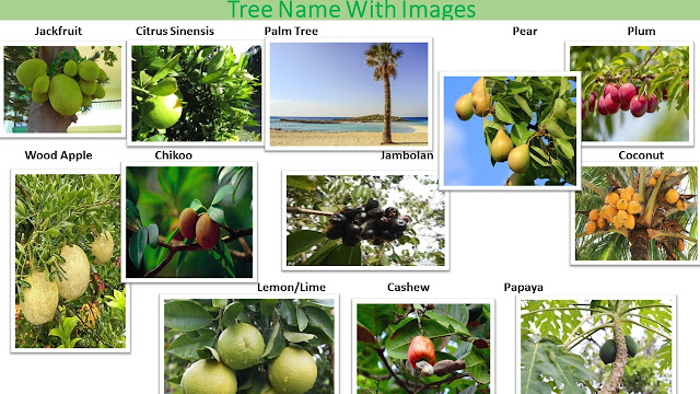Names of Trees with Pictures