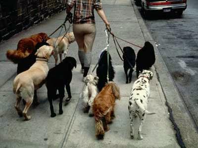 Pet-sitting - passeio com cães