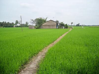 Thủ tục chuyển đổi đất nông nghiệp thành đất thổ cư