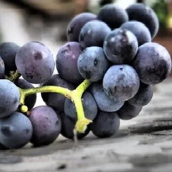 काळे द्राक्ष, Black grapes fruits name in Marathi