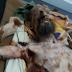 Imagens fortes: Homem é achado vivo após um mês sendo mantido como refém de urso; assista