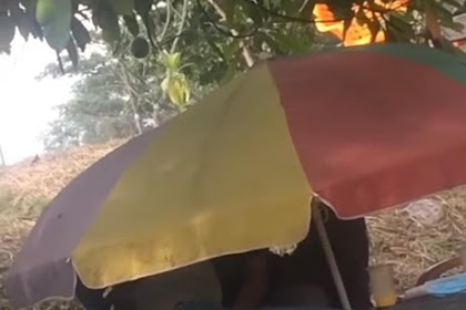 Viral Fenomena Payung Ceper Diduga Tempat Mesum, Ternyata Tidak Hanya di Pekanbaru