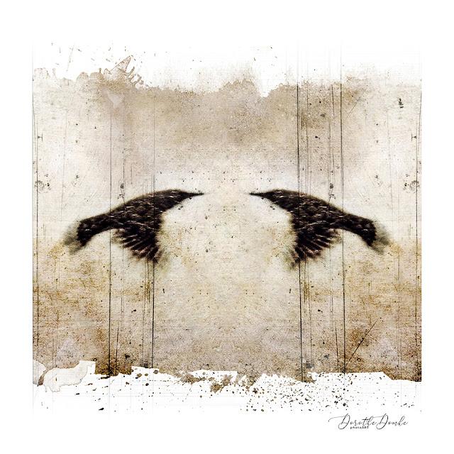 Vögel, photoart, art, Fotokunst, Dorothe Domke, Sauerland, icm, intentionalcameramovement, abstractart, abstract