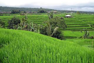 Inilah 10 Tempat Outbound Di Tabanan Bali