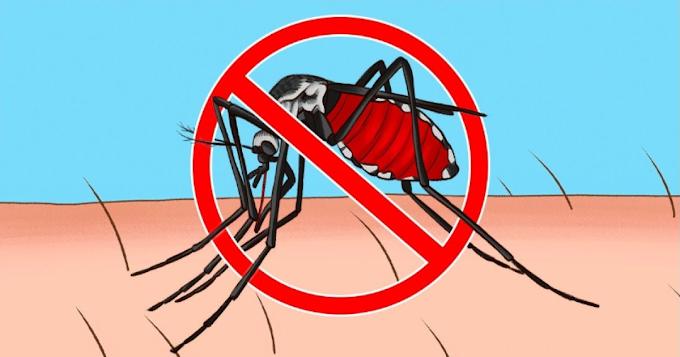 ခြင်အကိုက်မခံရစေဖို့ ထိရောက်တဲ့ သဘာဝနည်းလမ်းများ
