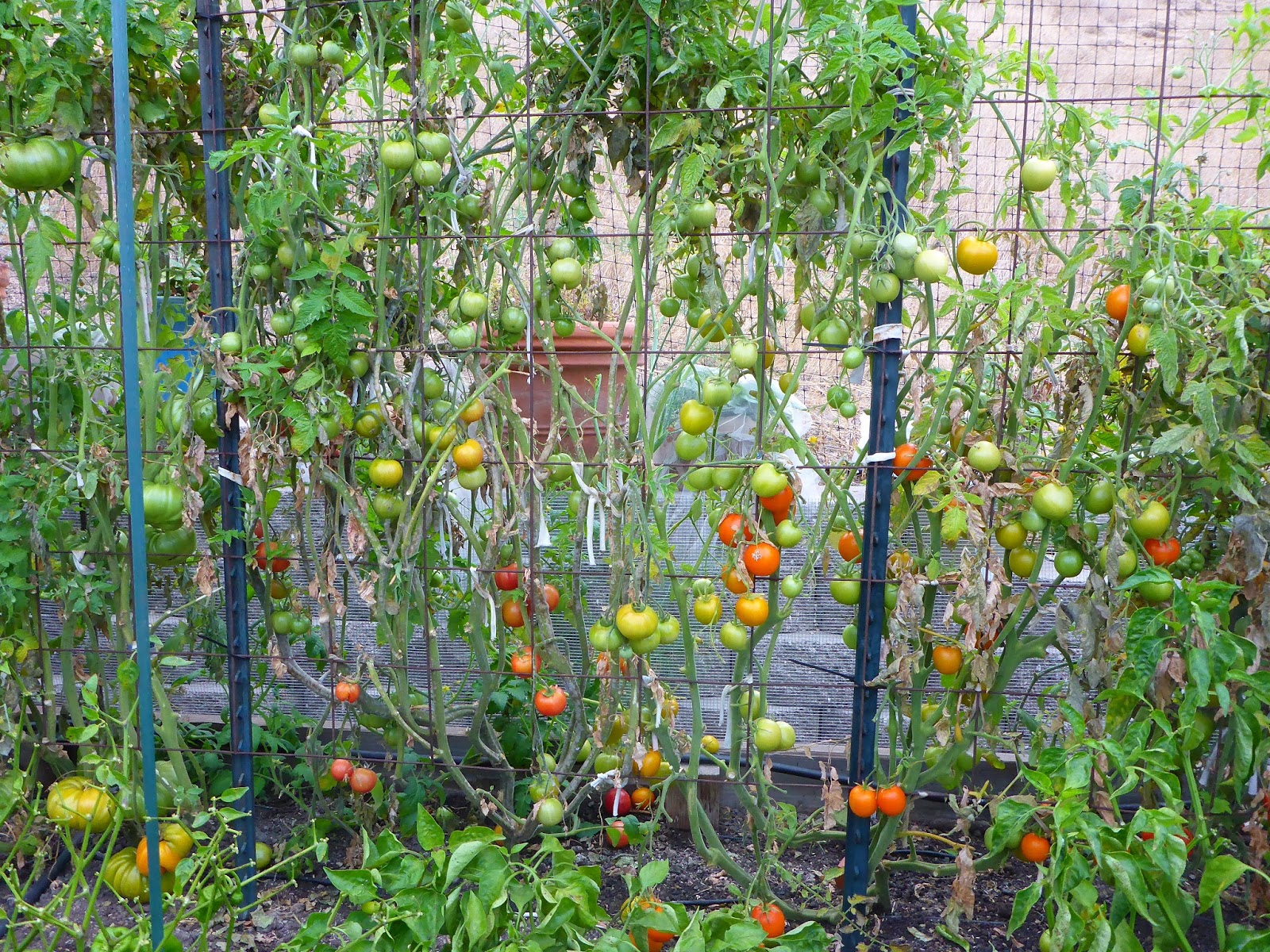 from seed to table garden update september 21 2016
