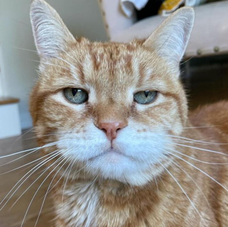 The cat has a funny little snout that expresses his apparent sadness
