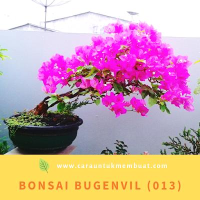 Bonsai Bugenvil (013)