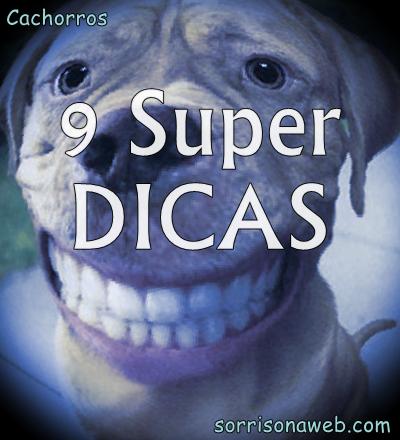 9 super dicas sobre cachorros - sorriso na web