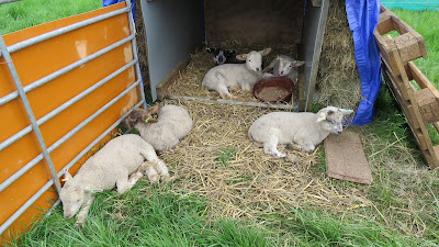 Image: Lamb Shelter on the HenSafe Smallholding