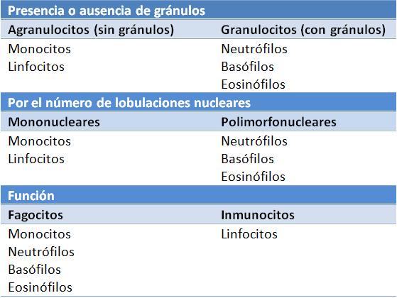 Normales basofilos