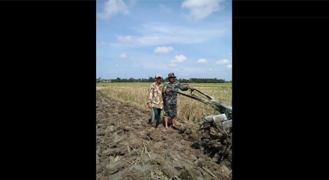 Sertu AL Samosir Dampingi Petani Mengolah Lahan Sawah di Desa Tanjung Sigoni