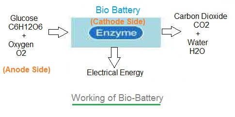 how to make a bio battery