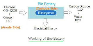 bio battery working principle
