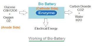 bio battery working principle