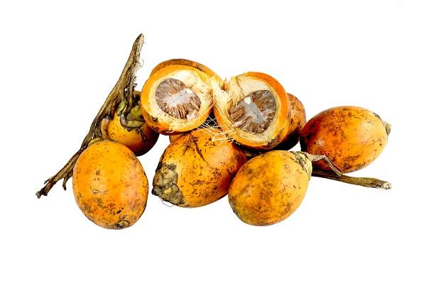Manfaat dan Kandungan Pinang
